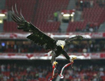 Águia Vitória (Benfica): slbenfica.pt